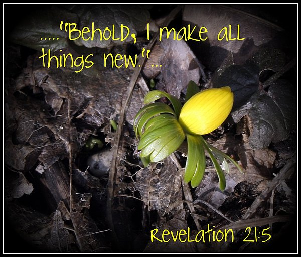 Spring Photograph - All Things New by Elizabeth Babler