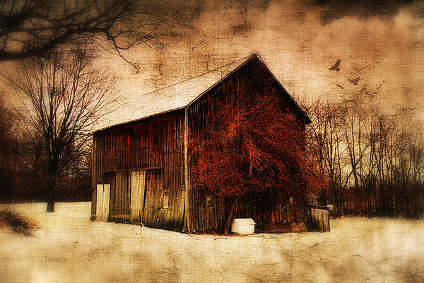 Old Barn Photograph - Alone At Sunset by Mary Timman