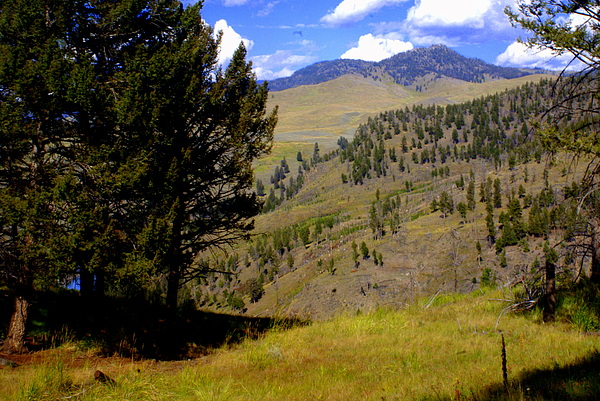 Yellowstone National Park Photograph - Along The Hell Roaring Creek Trail by Marty Koch