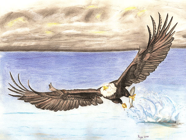 Eagle Catching Fish Drawing American Bald Eagle Ca...