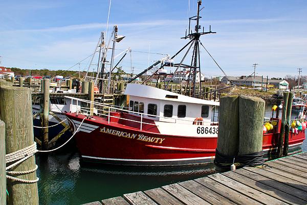 Cape Cod Photograph - American Beauty by Extrospection Art