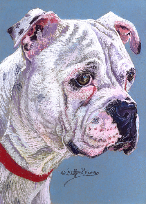 Dog Painting - American Bulldog by Stephanie Grimes