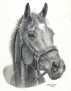 Barbaro Drawing - An American Champion by Laura Smith