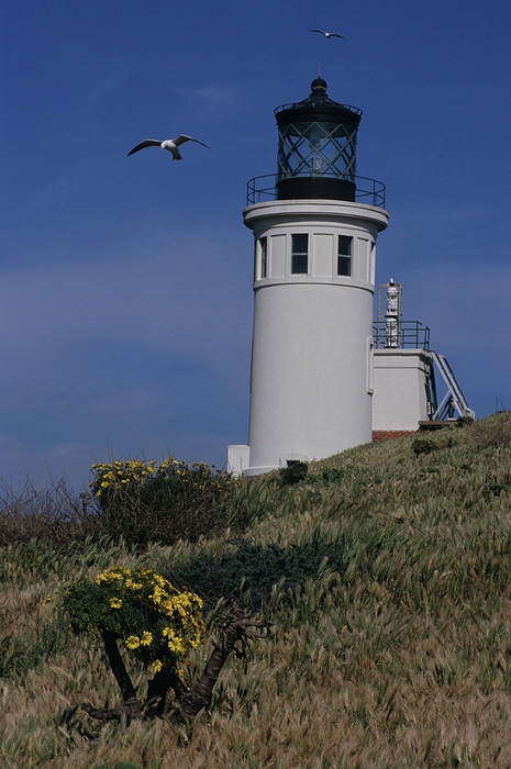 Anacapa Light House And Western Gulls Photograph - Anacapa Lighthouse And Western Gulls by Don Kreuter
