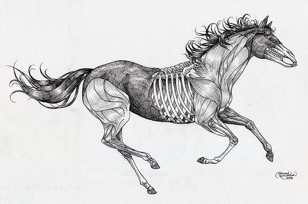 Anatomical Horse Tattoo Drawing by Hannah Kincannon