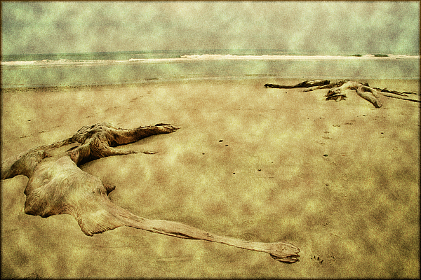 Oregon Beach Photograph - Ancient Tree Roots by Bonnie Bruno