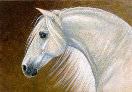Horse Painting - Andalusian Horse Portrait Miniature by Shari Erickson