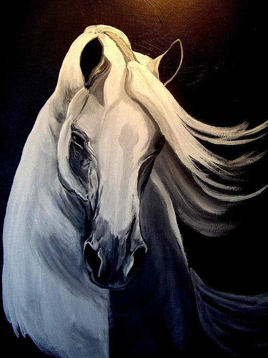 Horse Painting - Andalusian Stallion by Glenda Smith