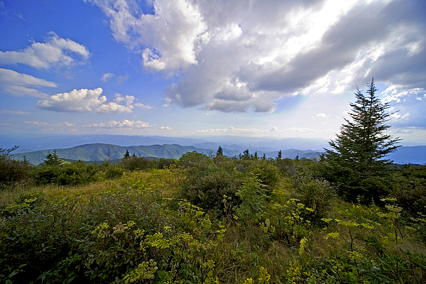 Great Smoky Mountains Photograph - Andrews Bold by Richard Steinberger