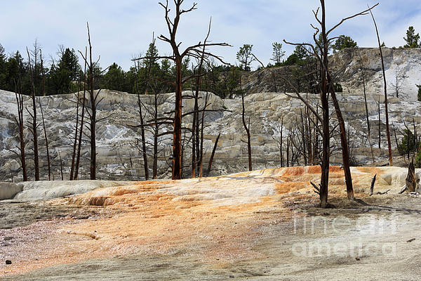 Thermal Photograph - Angel Terrace At Mammoth Hot Springs Yellowstone National Park by Louise Heusinkveld