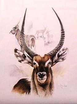 Buck Mixed Media - Antelope by Joan Beuche
