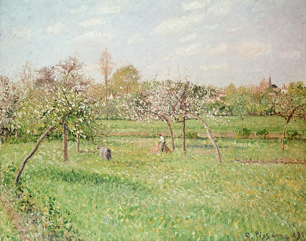 Apple Painting - Apple Trees At Gragny by Camille Pissarro