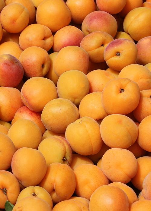 Apricot Photograph - Apricots by Carol Groenen