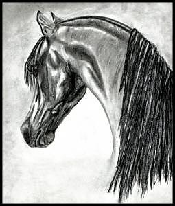 Arabian Drawing by Crystal Suppes