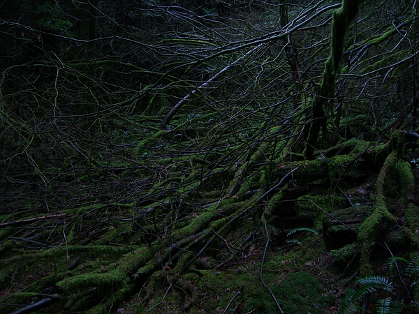 Arnor Photograph - Arboreal Forest by Jim Thomson