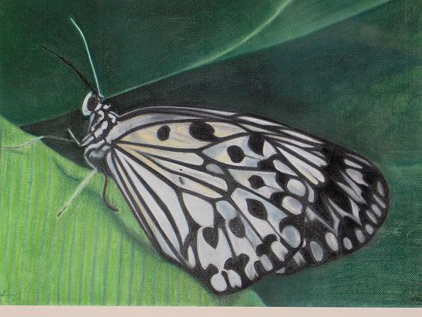 Butterfly Pastel - Arlequinezca 1 by Angela BZ