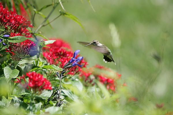 Hummingbird Photograph - Art In Motion by E Mac MacKay