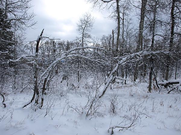Winter Photograph - As Winter Returns by DeeLon Merritt