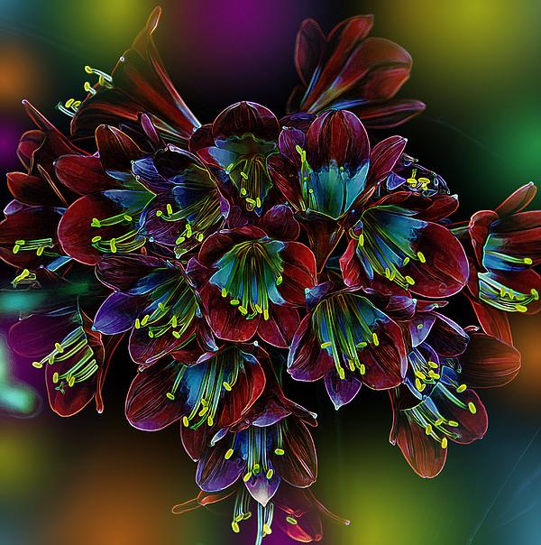 Flowers Photograph - Assortment Of Splendor by Bill Tiepelman