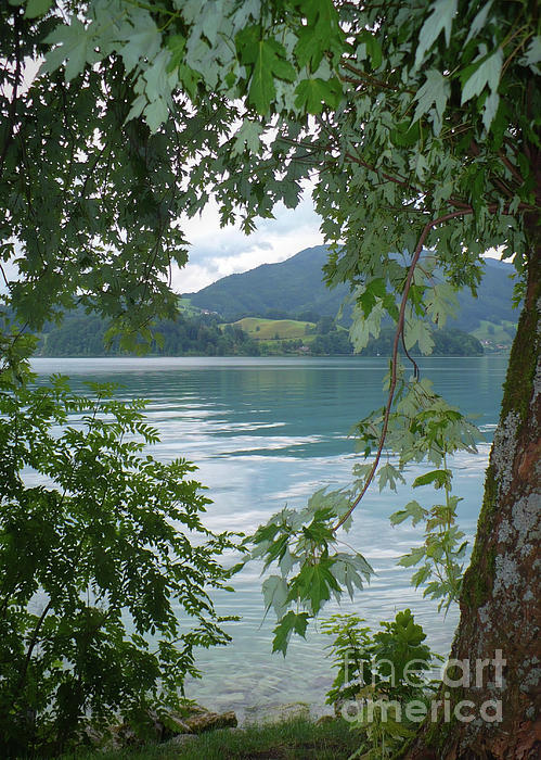 Austria Photograph - Austrian Lake Through The Trees by Carol Groenen