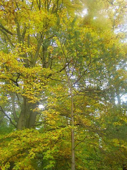Photo Photograph - Autumn Arrives1 by Joanna  Kasprzak