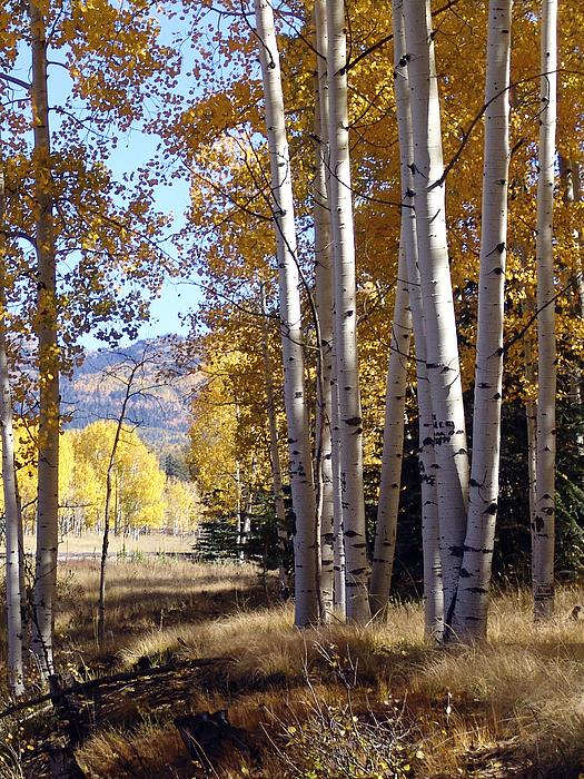 Autumn Photograph - Autumn Chama New Mexico by Kurt Van Wagner