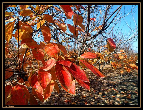 Autumn Photograph - Autumn Colors 06 by Arik Baltinester