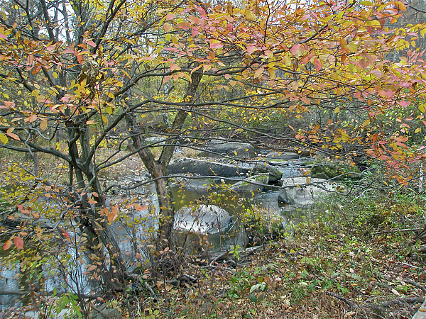 Creek Photograph - Autumn Comes To The Unami Creek by Mother Nature