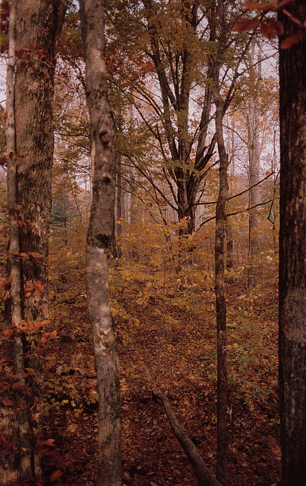Autumn Photograph - Autumn by Courtney Stone-moore