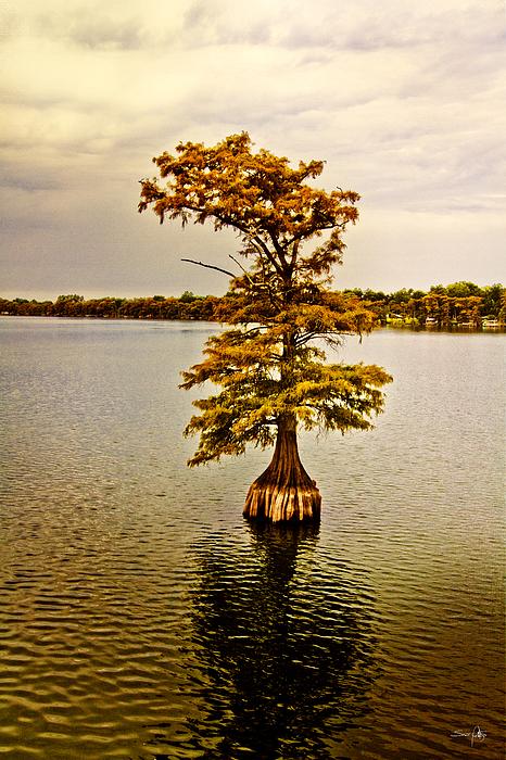 Cypress Photograph - Autumn Cypress by Scott Pellegrin