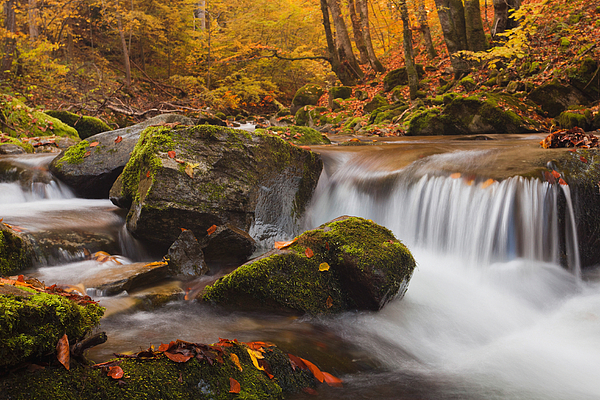 Mountain Photograph - Autumn Forest by Evgeni Dinev