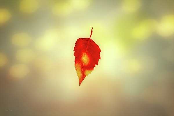 Leaves Photograph - Autumn Leaf by Bob Orsillo