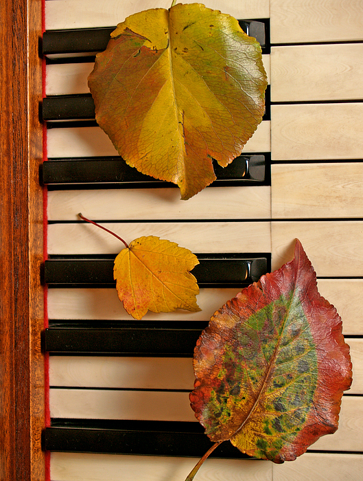 Piano Photograph - Autumn Leaf Trio On Piano by Anna Lisa Yoder