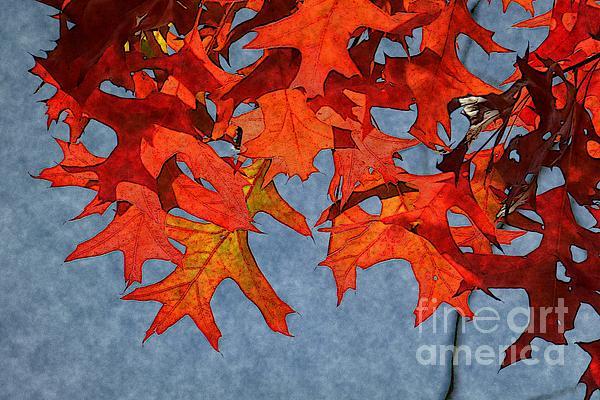 Autumn Photograph - Autumn Leaves 19 by Jean Bernard Roussilhe