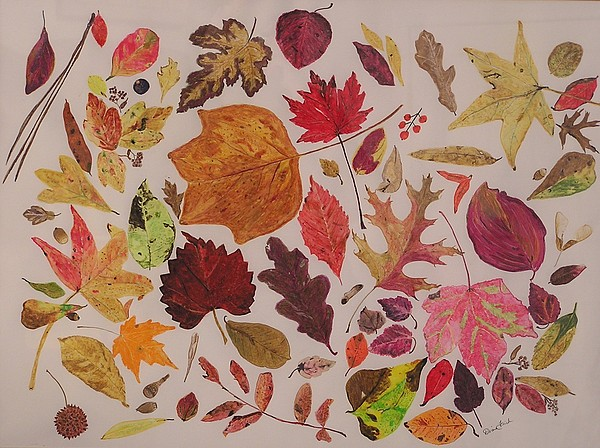 Fall Drawing - Autumn Leaves by Diane Frick
