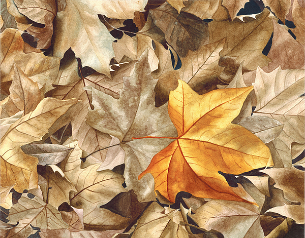 Leaf Painting - Autumn Leaves Series 2 by Kat Skinner