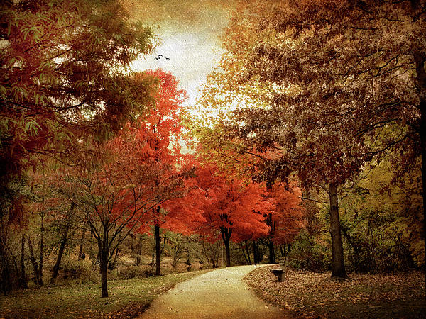 Autumn Photograph - Autumn Maples by Jessica Jenney