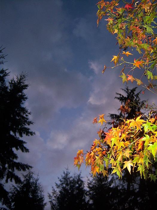 Autumn Photograph - Autumn Sky by Ken Day