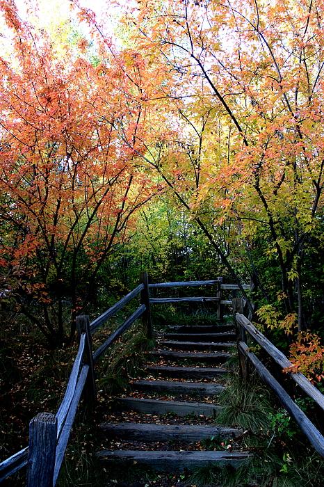Autumn Photograph - Autumn Steps by Joseph Peterson