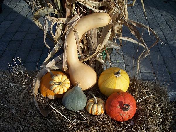 Gourds Photograph - Autumn Still Life by Rosanne Bartlett