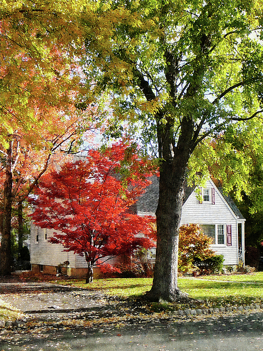 Suburban Photograph - Autumn Street With Red Tree by Susan Savad