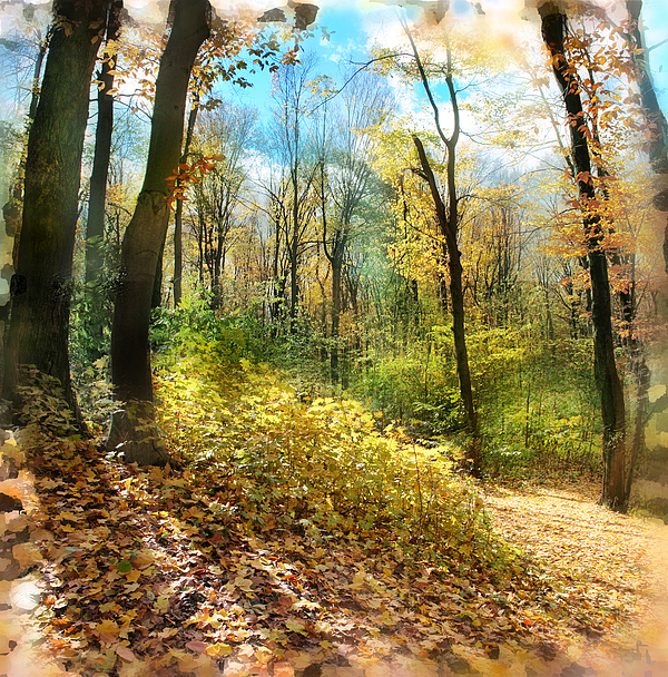 Nature Landscapes Photograph - Autumn Trail by Gina Signore