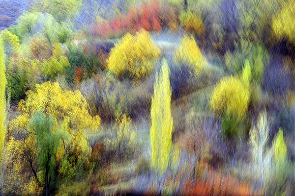 Autumn Photograph - Autumnal by Robert Shahbazi