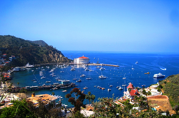 Catalina Photograph - Avalon Harbor At Catalina by Catherine Natalia  Roche