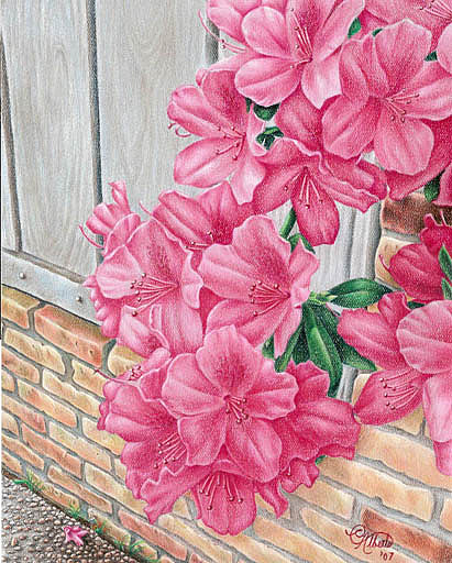 Azaleas Drawing by Carlos Esquivel