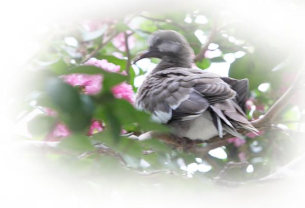 Baby Photograph - Baby Bird In Crape Myrtle Tree by Linda Phelps