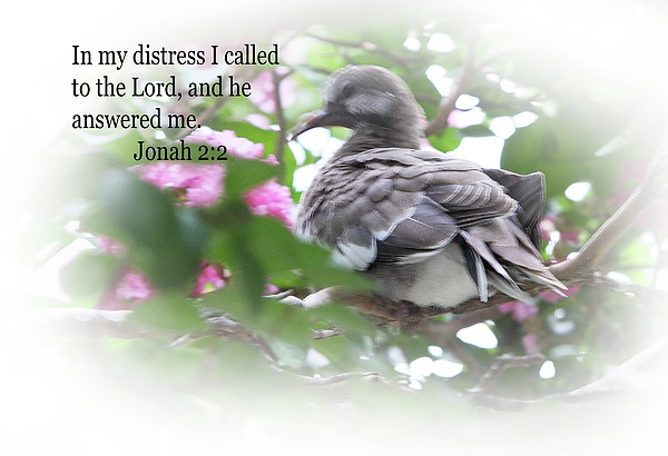 Scripture Photograph - Baby Dove Jonah 2 V 2 by Linda Phelps