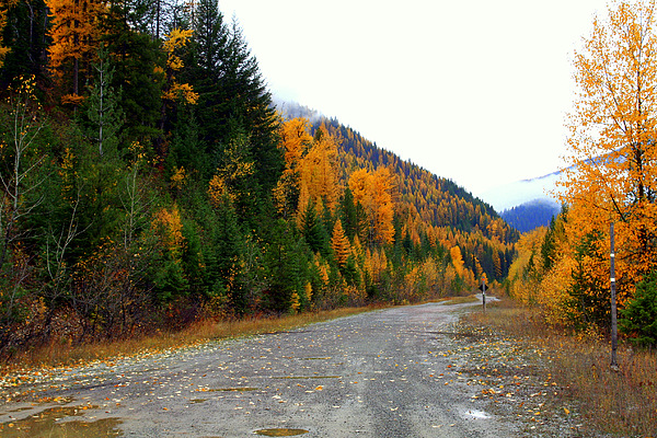 Mountains Photograph - Back Road Color by Lynn Bawden