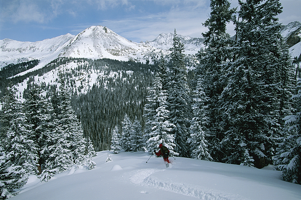 Atkinson Photograph - Backcountry Skiing Into An Evergreen by Tim Laman