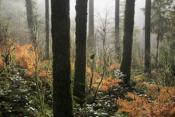 Backlit Bracken Ferns Photograph by Adam Gibbs